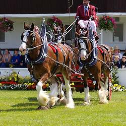 Great Yorkshire Show 2011 - Heavy Horse Team Turnouts