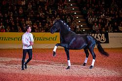 The dancing Horses<br /> Oldenburg - AGRAVIS-Cup 2018<br /> Eröffnung<br /> Gala-Abend<br /> 03. November 2018<br /> © www.sportfotos-lafrentz.de/Stefan Lafrentz