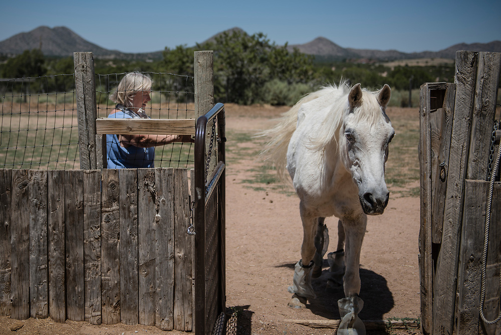 rer062917e/Fetch/June 29, 2017/Albuquerque Journal<br /> <br /> Kindred Spirits Animal Santuary in Cerillos New Mexico takes in older animals only, either for adoption or to live out their lives in peace.  Owner Ulla Pederson(Cq) is seen here letting a mare called Moonspirit into her stall for feeding time. <br /> Santa Fe New Mexico Roberto E. Rosales/Albuquerque Journal