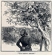 Jack Easy caught scrumping apples.  Illustration for 'Mr Midshipman Easy' by Captain Marryat.