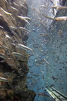 Akvariet i Osaka, the aquarium in Osaka