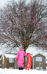 Lucy Patten (5) gets ready to sledge beneath a blossom covered tree in Cambridge, as unseasonal snowfall blankets the country. UK, March 24 2013.  Photo by Matthew Power / i-Images...