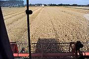Nederland, Ubbergen, 15-8-2012Een veld met tarwe, graan wordt door een combine geoogst. Tarweveld,graanveld.Foto: Flip Franssen/Hollandse Hoogte