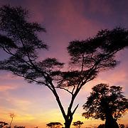 An African sunrise in the Okavango Delta - Mombo - Okavango Delta - Botswana