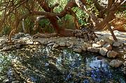 Ein Gedi sweet water springs, in the Judean desert, Israel, Wadi David nature reserve