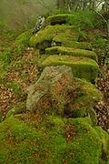 Mossy rocks at Peloño Forest, Ponga, Asturias, Spain