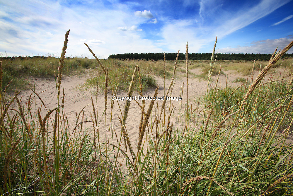 Sand dunes near Tentsmuir forest Fife. 2015.Photograph David Cheskin