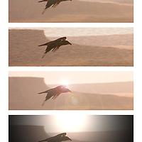 A raven soars over Arizona desert. Impressionistic streaks.