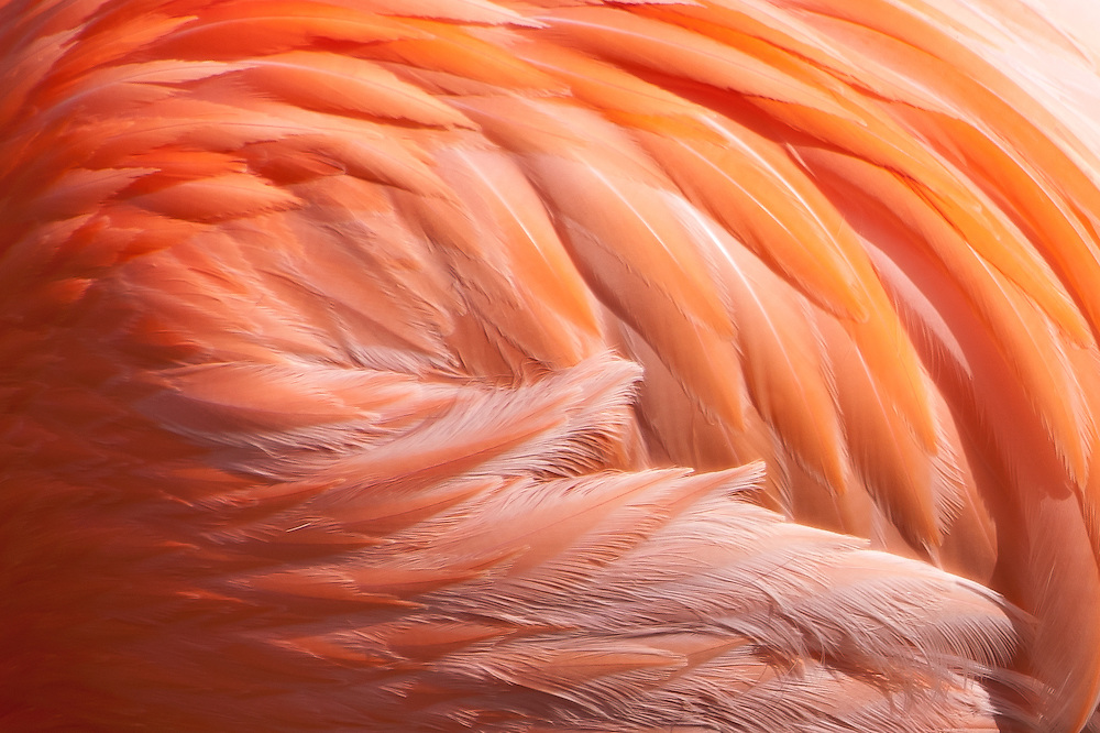A design pattern of Flamingo feathers