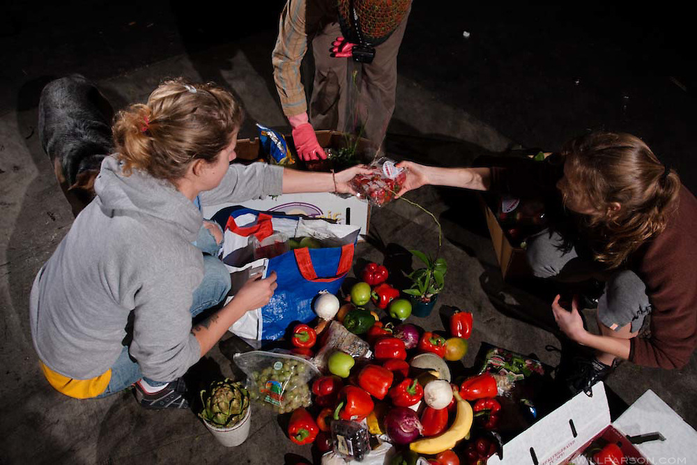 Freegans salvage edible food from a grocery store dumpster in San Diego, California.  Freeganism is a movement based on limited participation in the conventional economy and minimal consumption of resources.