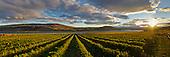 Wine Panoramics