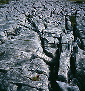 Limestone pavement, Yorkshire Dales national park, Yorkshire, England