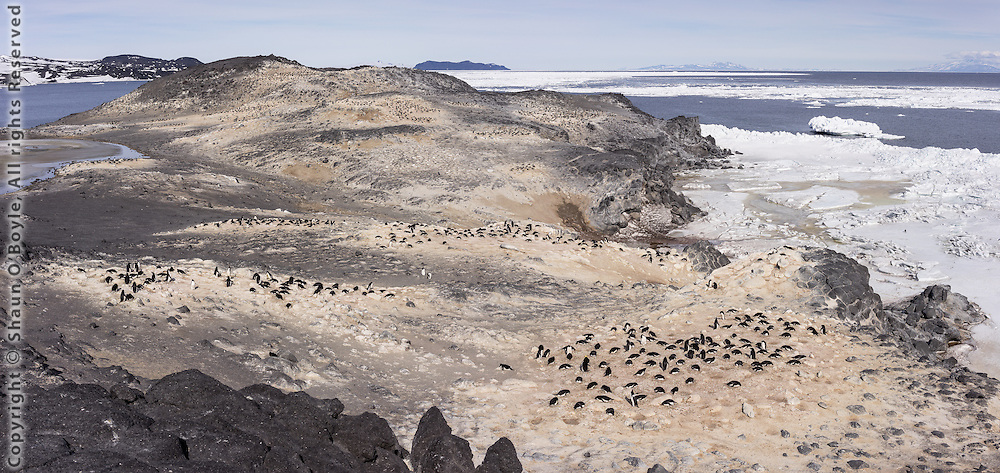 Adelie Penguin colony on Cape Royds