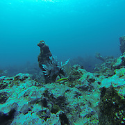 Scuba diving in Grand Cayman Island.