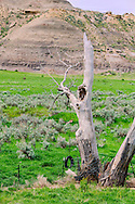South of Jordan, Montana, tire swing, cottonwood tree
