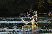Henley on Thames,  Looking cross the River Thames, at Henley, opposite Henley Rowing Club,  on Mill Meadows,  XXXX with the Sun on their back watch the crews moving down river for an early morning training session on Henley reach.  07/10/2006.  Photo, Peter Spurrier/Intersport-images].