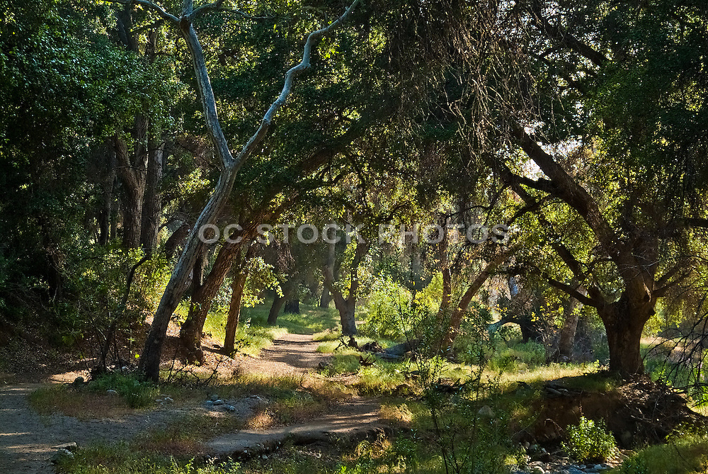 Whitney Canyon Park Hiking Trail