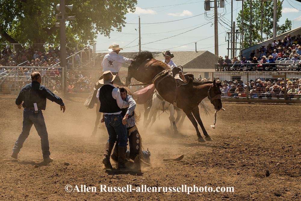 Injured saddle bronc rider rescued by chute boss Pat Linger and Ty Linger, Miles City Bucking Horse Sale, Montana.