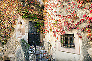 Charming rustic facade and ivy, Eze, Cote d'Azur, France