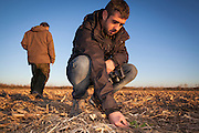 Wildlife researchers collecting droppings and checking food availability of Little Bustard (Tetrax tetrax). Lleida province. Catalonia. Spain.