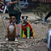 There weren't just superheroes at the CASA Superhero run Saturday in Oxford, MS there were also superdogs like Ox