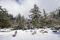 Family Sledding on Fresh Snow, Mount Baldy, California