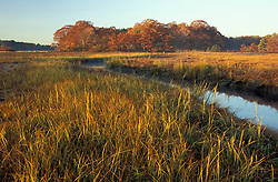 "A tidal creek in a New Hampshire salt marsh. Tidal marsh. Oak trees.  ""Massacre Marsh.""  Fall. Rye, NH"
