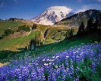 Mount Rainier 14,411¬+ft (4,392¬+m) from wildflower meadows of Paradise, Mount Rainier National Park Washington USA