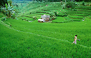 A woman passing rice terraces near Iseh.