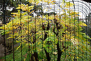 General view through Vulture Aviary, Parc Zoologique de Paris, or Zoo de Vincennes, (Zoological Gardens of Paris, also known as Vincennes Zoo), 1934, by Charles Letrosne, 12th arrondissement, Paris, France, pictured on November 19, 2010, in the afternoon. In November 2008 the 15 hectare Zoo, part of the Museum National d'Histoire Naturelle (National Museum of Natural History) closed its doors to the public and renovation works will start in September 2011. The Zoo is scheduled to re-open in April 2014. Picture by Manuel Cohen.