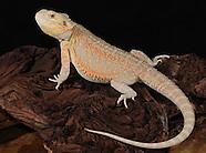 Rockinair Dragonz