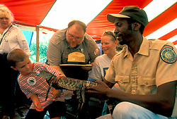 Stock photo of a young boy admiring an adolescent alligator at the Anhuac Texas Gatorfest