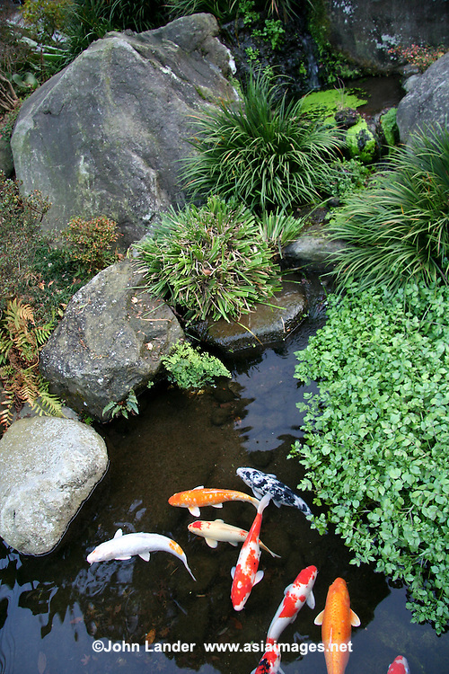 Koi carp pond john lander photography for Japanese koi pond garden