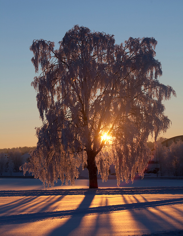 Norway Winter freezing cold snow january sun sunny Stange Norwegian winter Norwegian winterscape