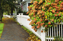 July 21, 2019 - Sidewalk And White Fence, Woodstock, Vermont, Usa (Credit Image: © Bilderbuch/Design Pics via ZUMA Wire)