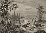 Scene during the Lower Oolite period showing reconstructions of  Ichthyosaurus, Plesiosaurus and a Marsupial.  From 'The Popular Encyclopaedia' (London, 1888). Engraving.
