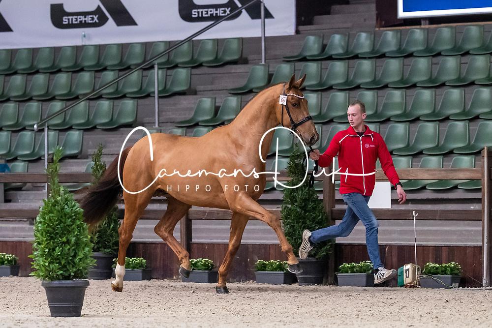 066, Romeno Begijnhoeve<br /> BWP Hengsten Keuring - Lier 2020<br /> © Hippo Foto - Dirk Caremans<br /> 16/01/2020
