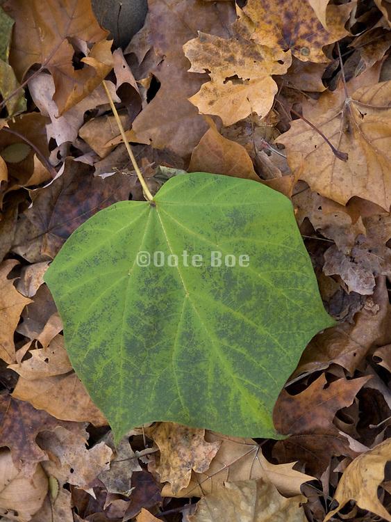 single green leaf on fallen autumn leaves