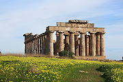 Eastern Temple E, with Doric columns, dedicated to Hera or Dionysus, 6th-5th century BC Greek, Selinunte, Sicily, Italy. Picture by Manuel Cohen