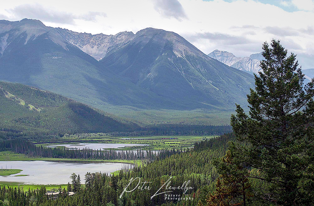 Vermillion Lakes from Mount Norquay