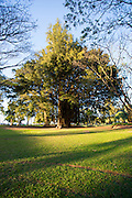 Banyan Tree, Liliuokalani Gardens, Hilo, The Big Island of Hawaii