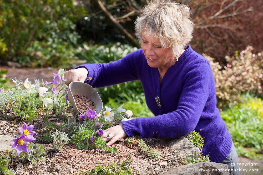 Carol Klein tidying and adding grit mulch around pulsatillas