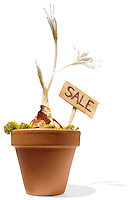 Potted plant for sale on white background