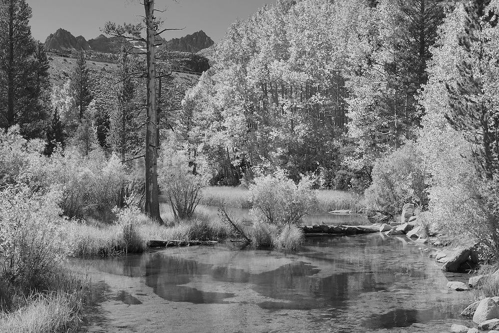 Bishop Creek Middle Fork - Infrared Black & White