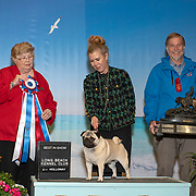 Long Beach Kennel Club 01/13/2019