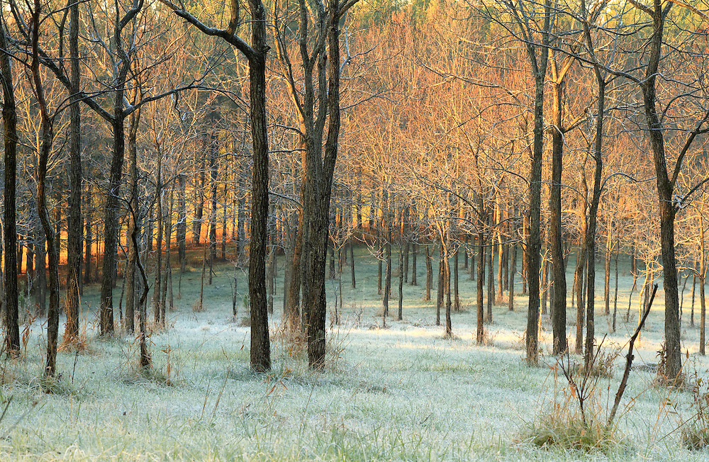 Sunrise on a cold autumn morning created the beautiful warmth in the trees. But below, the frost settled on the cold grass.<br />