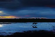 Impressionen aus dem Liuwa Plain Nationalpark im Westen von Sambia mit Wildhunden (Lycaon pictus)