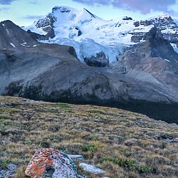 Mt Athabasca Sunrise from Wilcox Pass, Jasper National Park, Alberta, Canada