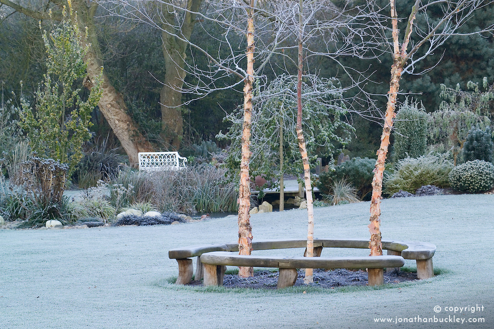 Curved bench seats around three birch trees - Betula nigra 'Heritage' on a frosty morning in John Massey's garden. Design: John Massey, Ashwood Nurseries