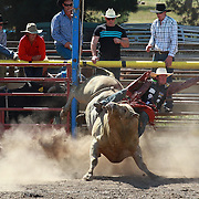 Cameron MacDonald from Southland feels the force of Ringo the Bull who throws him and kicks him in the groin during the Millers Flat Rodeo. Otago, New Zealand. 26th December 2011